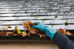 cleaning guttering of dead leaves